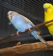 bright little parrots together
