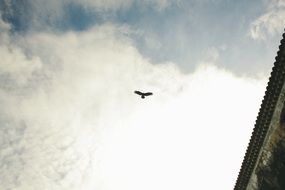 winged bird in a cloudy sky