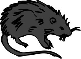 Black Rat, side view, drawing