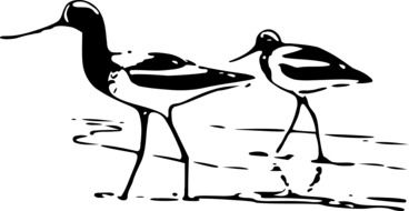 black and white drawing of wading birds