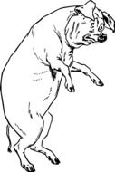 black and white drawing of a standing pig