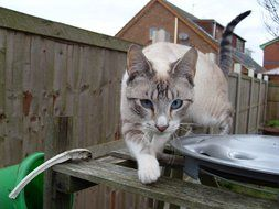 grey tabby cat is walking along the fence