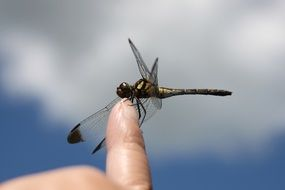 dragonfly on finger close up