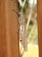 grasshopper on a wooden fence