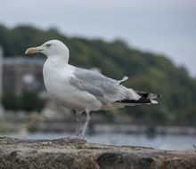 seagull sitting on the stone
