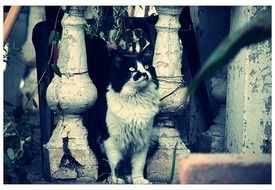 black and white cat stands on a stone staircase