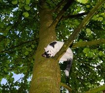 young black and white cat on the tree