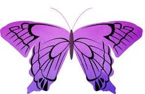 painted striped purple butterfly