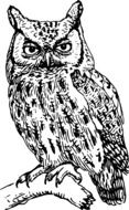black and white drawing of an owl on a tree branch