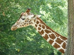 giraffe with long neck