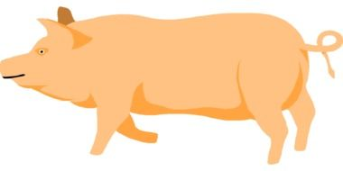 Barn Farm Pig drawing