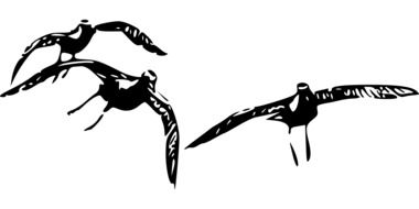 black and white drawing of flying birds