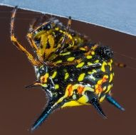 colorful spider on brown surface