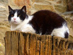 black white cat outdoor