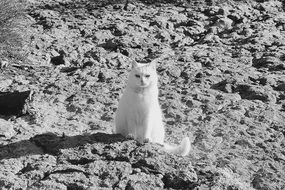 white fluffy cat on gray ground