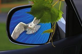 in the rearview mirror reflected seagull