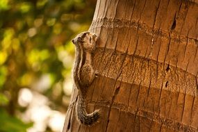 squirrel with a nut in its paws on a palm tree
