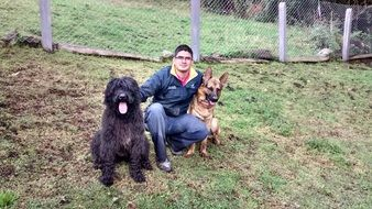 giant schnauzer and german shepherd with owner