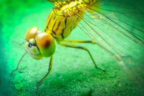 closeup of a yellow dragonfly