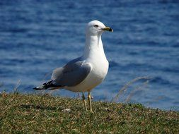 a seagull stands on a green beach