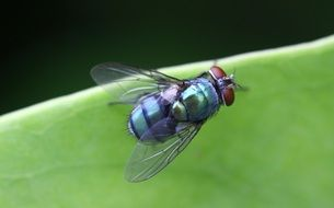a fly on a green leaf