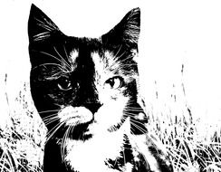 portrait of a domestic cat in black and white