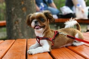 puppy in the park on a wooden bench