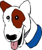 Head of White and Brown dog in Blue Collar, drawing