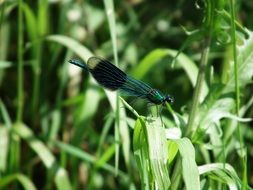 flying dragonfly on the background of summer grass