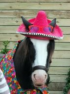 horse in a pink hat