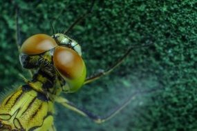closeup of a green dragonfly head
