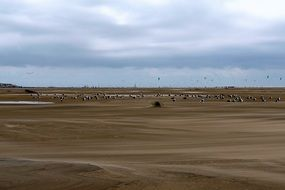 sea birds on the wadden sea