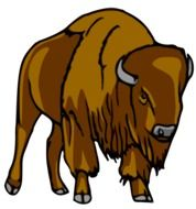 Bison Buffalo as a drawing