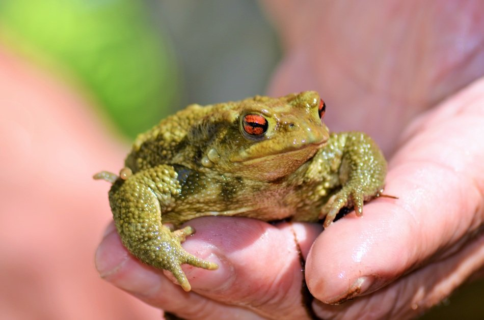 toad on the palm