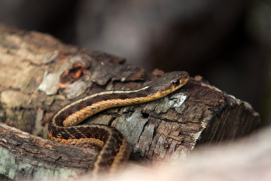 brown snake on the wood