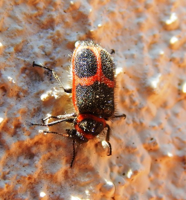 black and red bug in wildlife