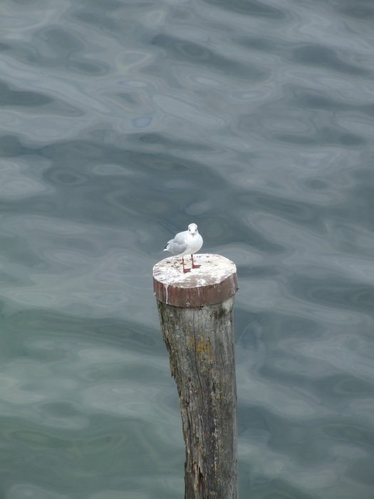 seagull standing on pile