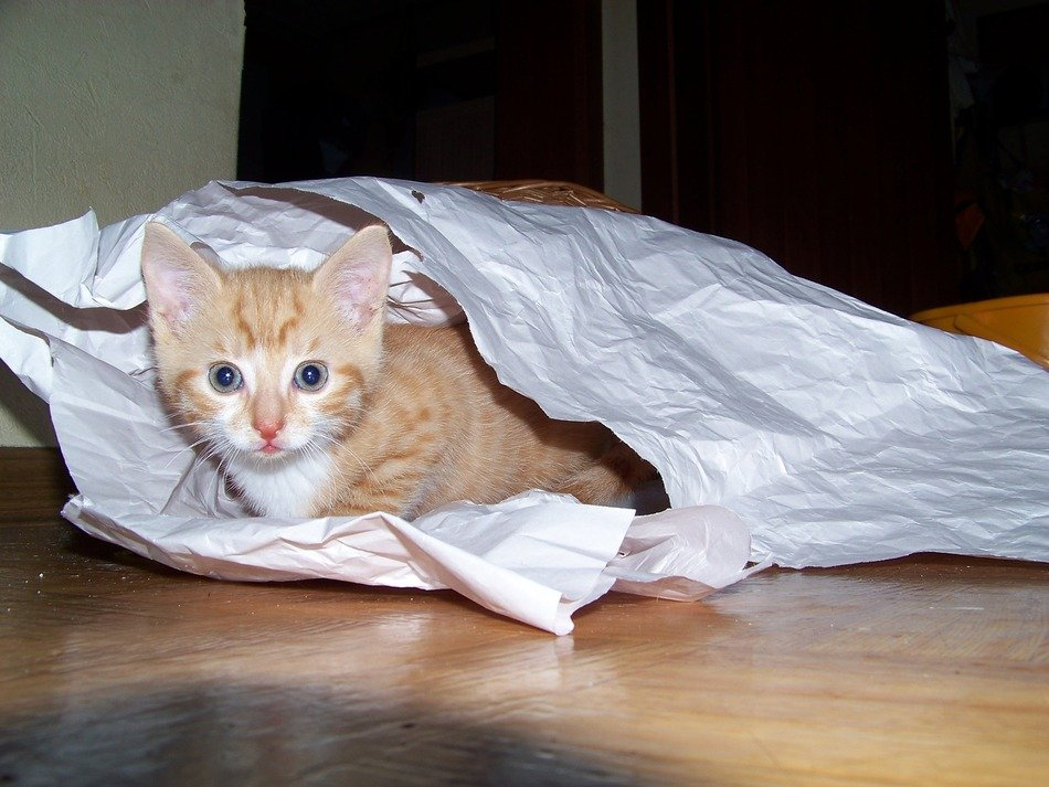 small red kitten in the paper bag