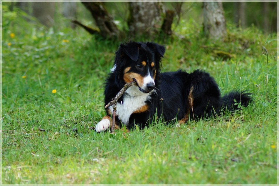domestic dog on meadow