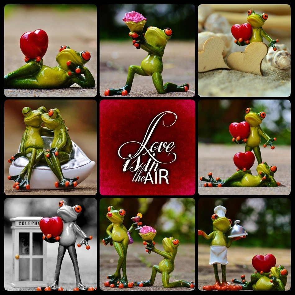 collage with funny frogs pictures