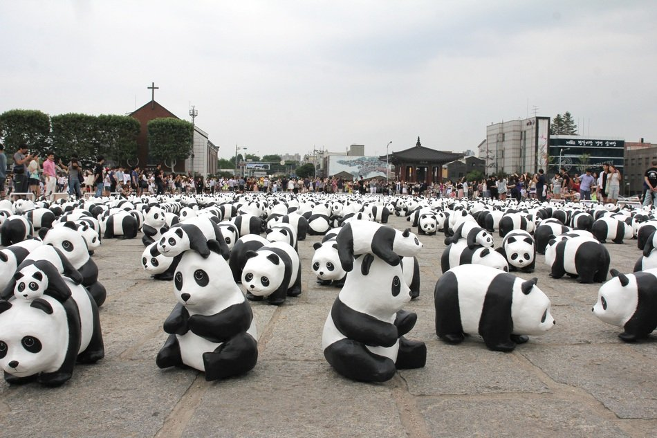 exhibition of pandas in korea