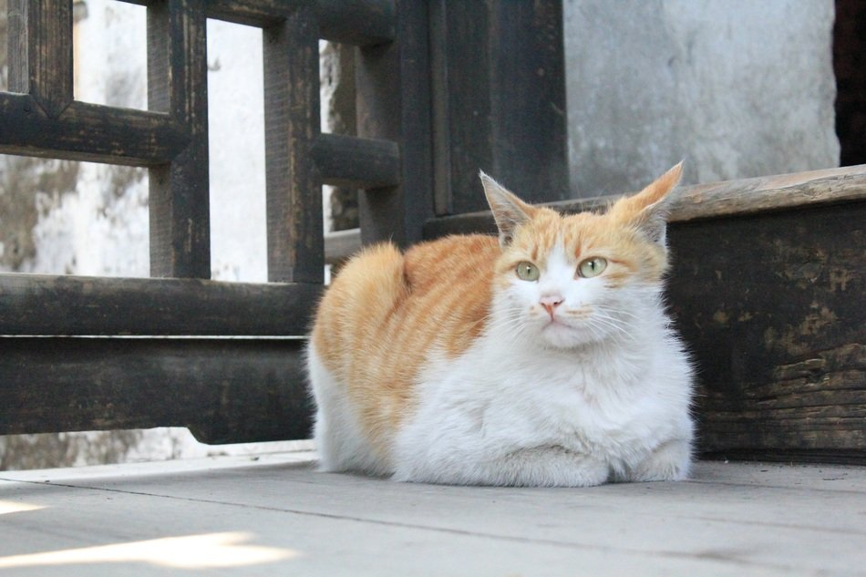 calm homeless cat