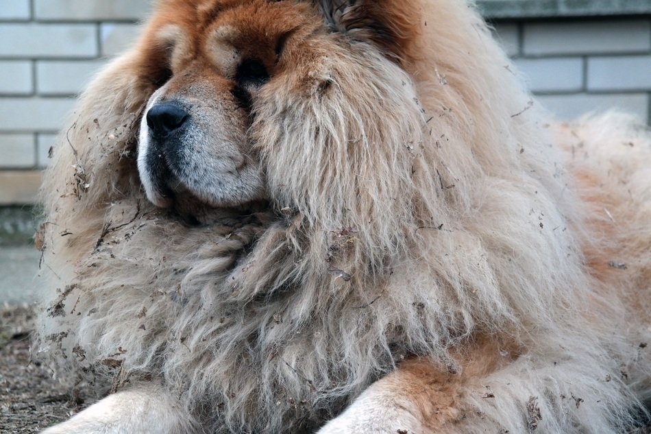 stunningly beautiful Hairy dog