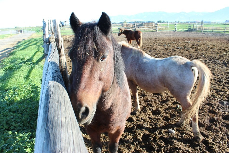 Domestic animals horse