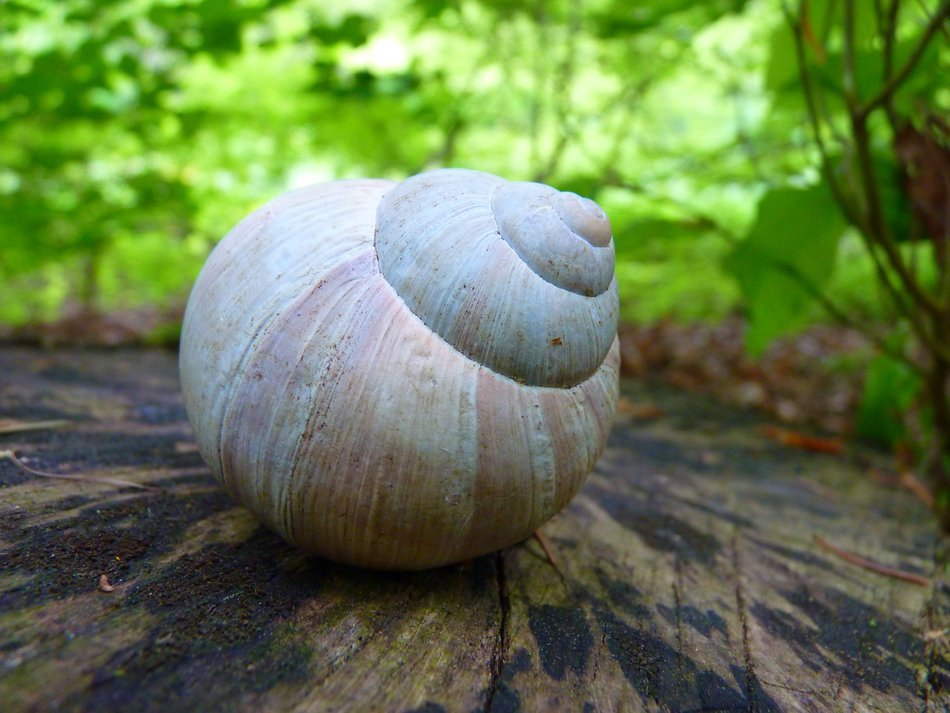 snail shell in the forest