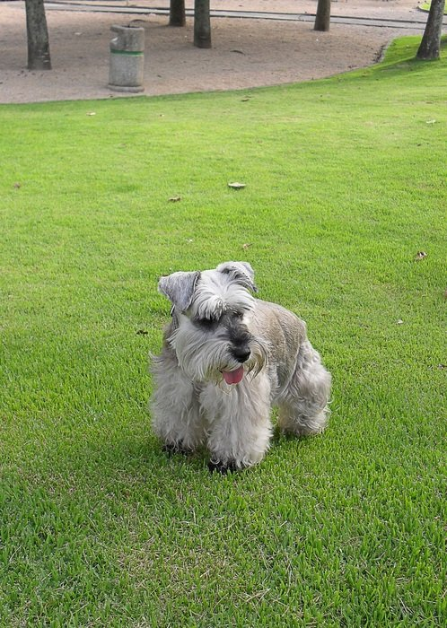 well-groomed dog on the green lawn