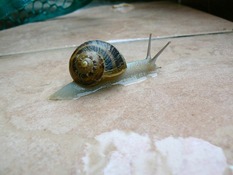 snail on the wet surface