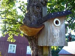tree fungus and birdhouse