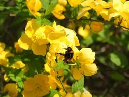 bee on a yellow flowering plant