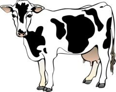 graphic image of a black and white cow